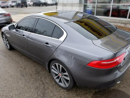 Jaguar Back